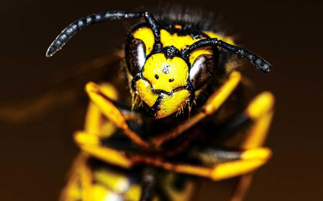 Insektenstiche: Wie kann man sie vorbeugen und beim Auftreten richtig behandeln?