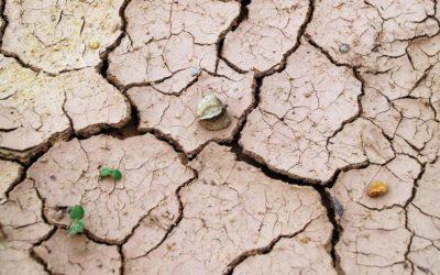 Trockene und juckende Haut: Ursachen und wie ich mir Linderung verschaffen kann